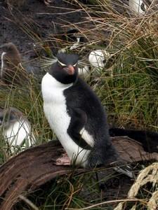 haben pinguine flossen