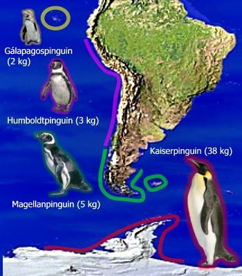 http://www.pinguine.net/bilder/wissengrafiken/bergmann2.jpg